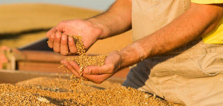 Ceny zbóż i rzepaku w UE