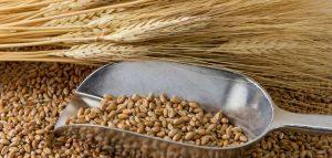 Światowy rynek zbóż – bilans